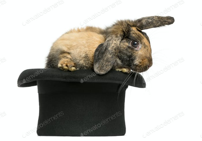 Rabbit getting out of a top hat in front of a white background