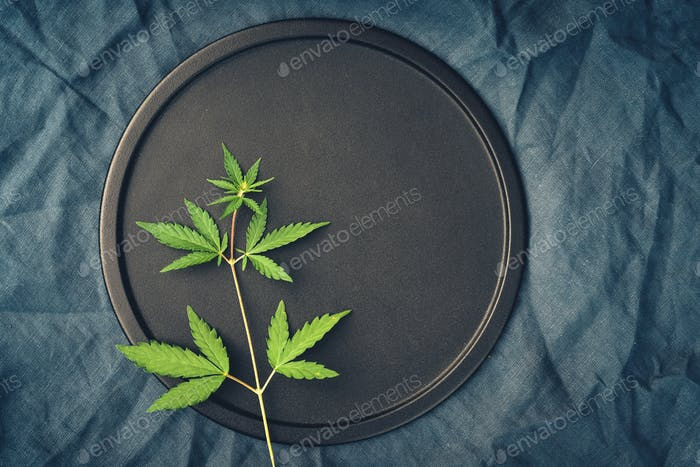 Template with marijuana leaves on dark background for cannabis products, CBD oil