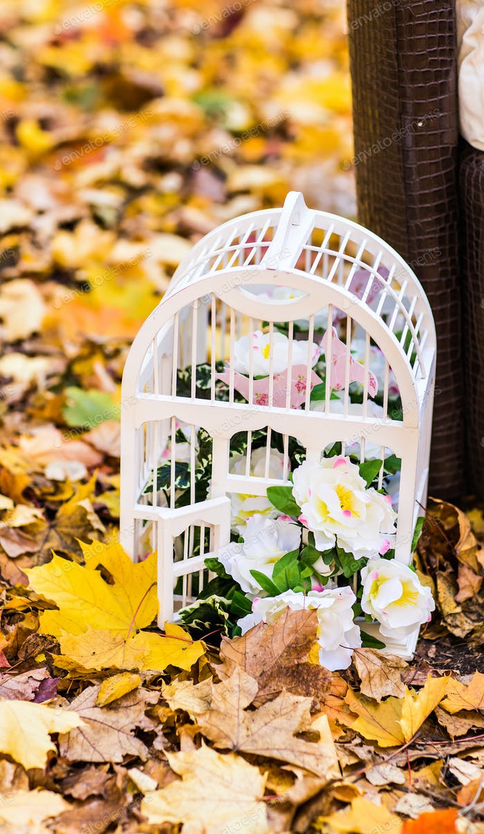 white vintage birdcage  on autumn leaves