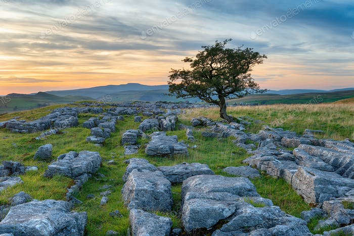 A lone tree on a limestone pavement at the Winskill Stones