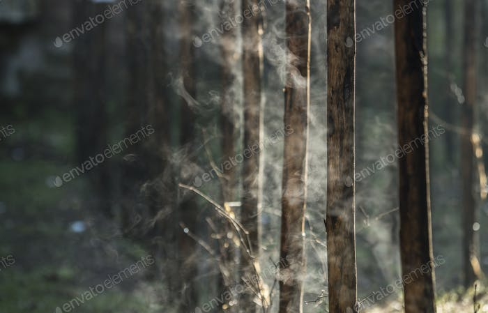 Water evaporation from bamboo stems in morning sun.