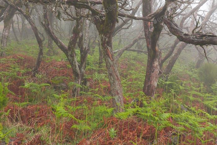 Foggy day in rainforest