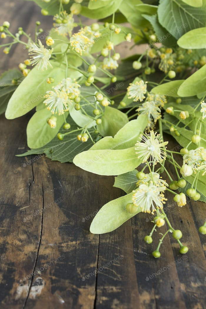 Linden Flowers on a Rustic Wooden Background
