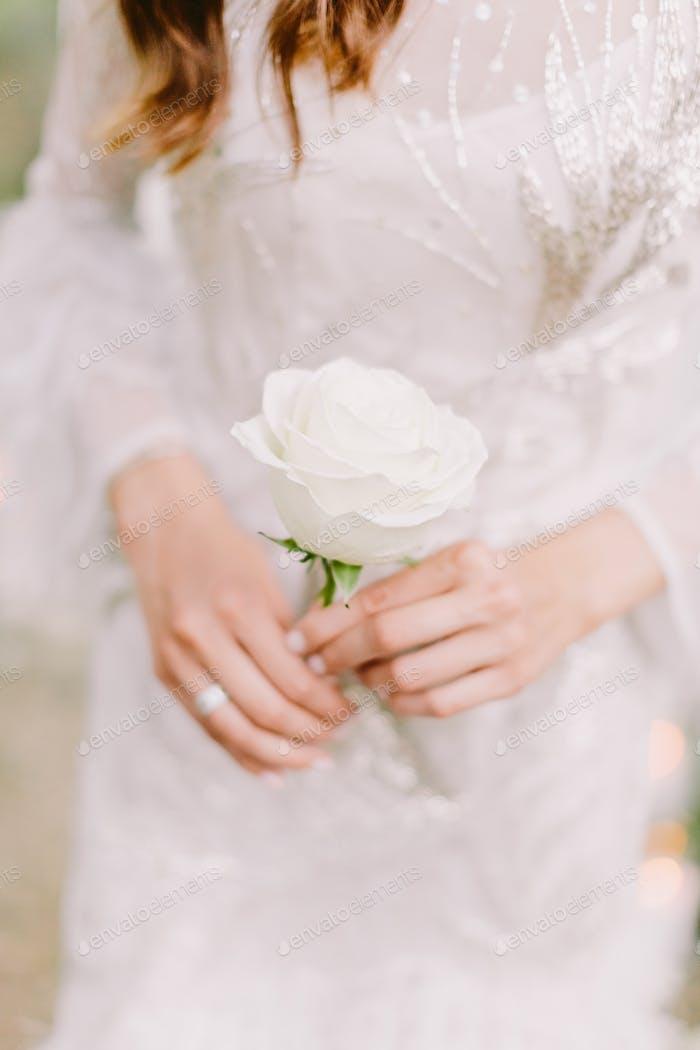 Frau hält weiße Rose Blume