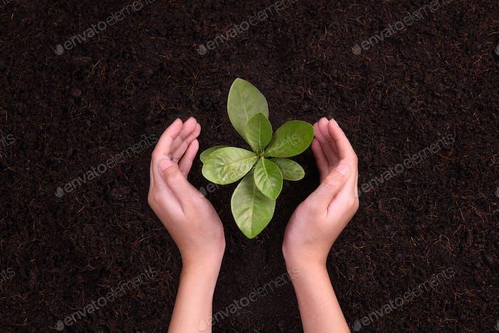 Las manos protegen la planta