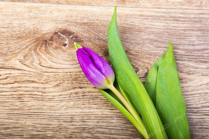 Violet tulip on a wooden table