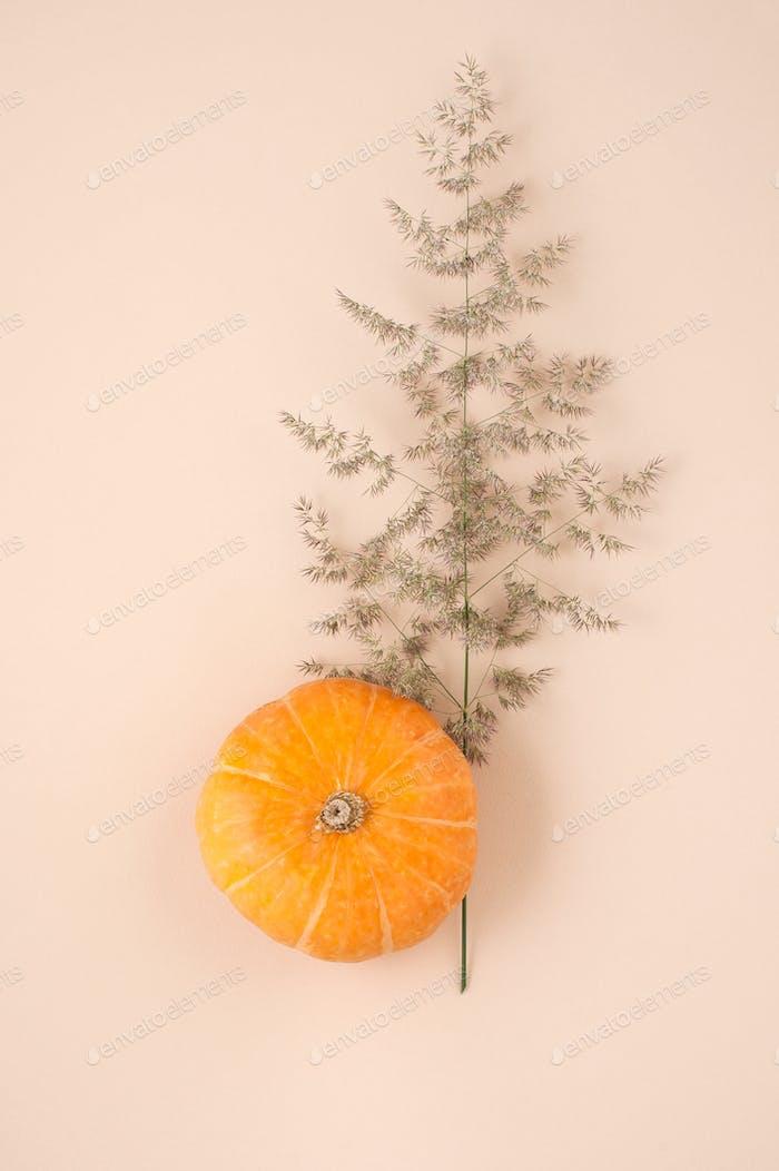 Orange Kürbis Nahaufnahme und Zweig einer trockenen Pflanze auf einem Licht bei