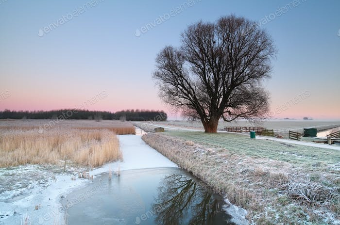 winter on Dutch countryside