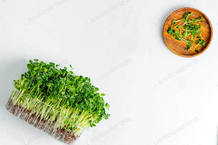 Fresh home grown organic microgreen in a transparent box on a light grey concrete background