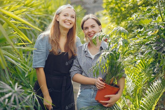 Frauen, die in einem Gewächshaus mit einem Blumenkuchen arbeiten