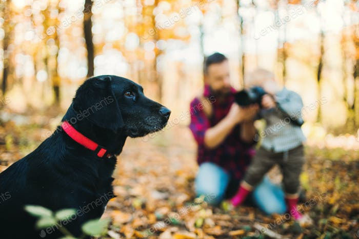 A father with a toddler son in an autumn forest, taking photograph of a dog.