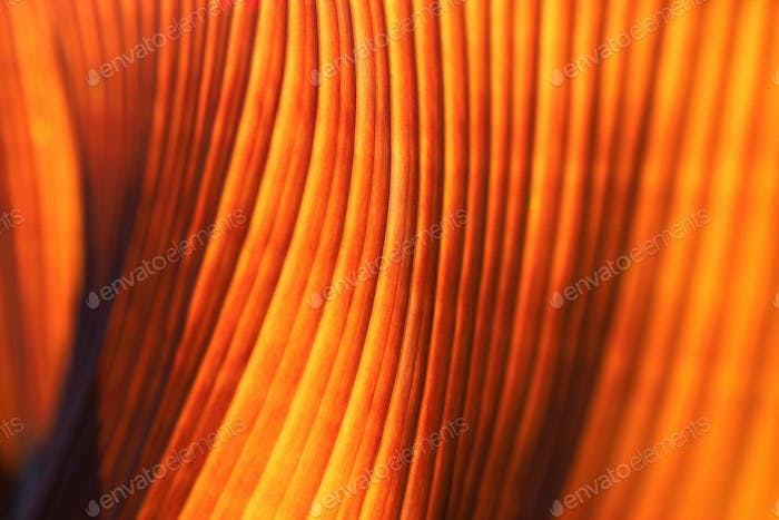 Banana palm tree leaf closeup. Natural texture background. Red vibrant color. Soft focus.