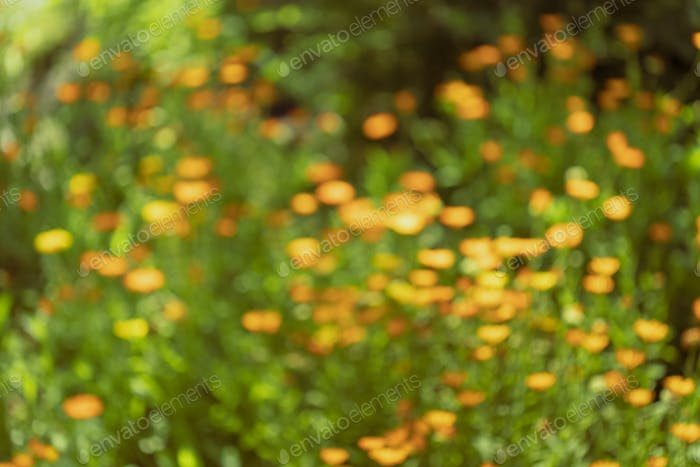 Nature Colorful Natural Blurred Background Of Out Of Focus Meadow. Bokeh, Boke Wild Flowers Absract