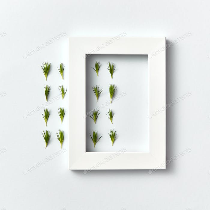 Froral composition with fresh needles and white frame on a light background