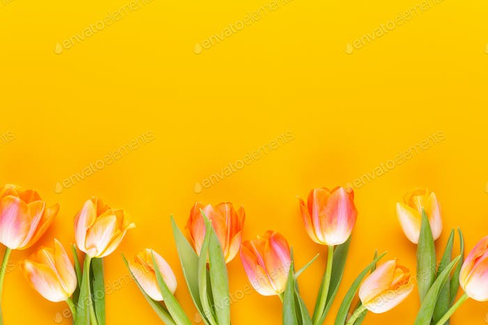 Yellow pastels color flowers on yellow background.