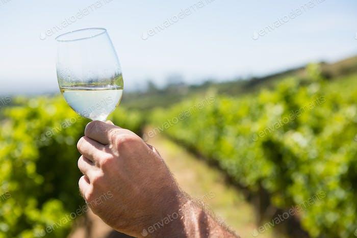 Vintner holding glass of wine