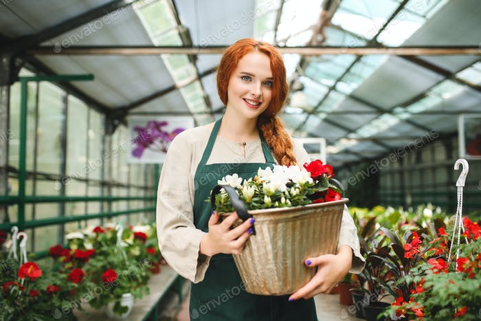 Beautiful lady in apron standing and holding flowers in metal pot while happily looking in camera