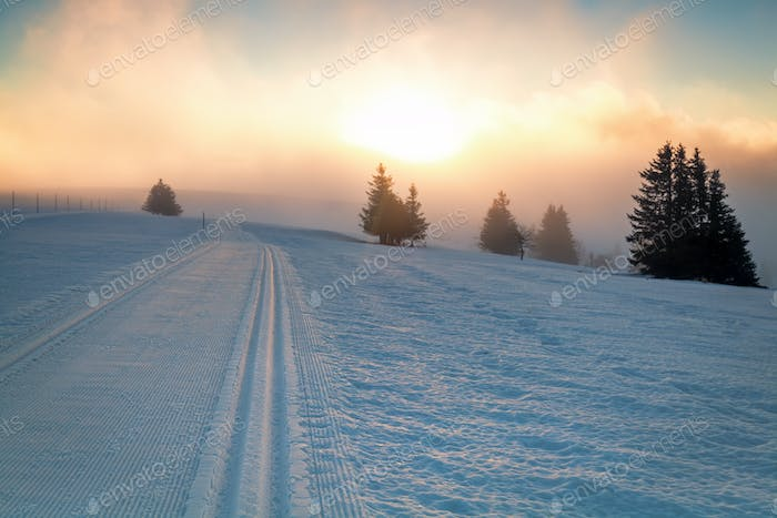 skiing snow path and sunlight
