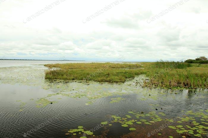 Lake Landscape - Lake Bisina - Uganda, Africa