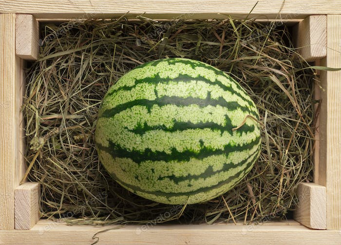 Organic and fresh watermelon on hay inside eco wooden box