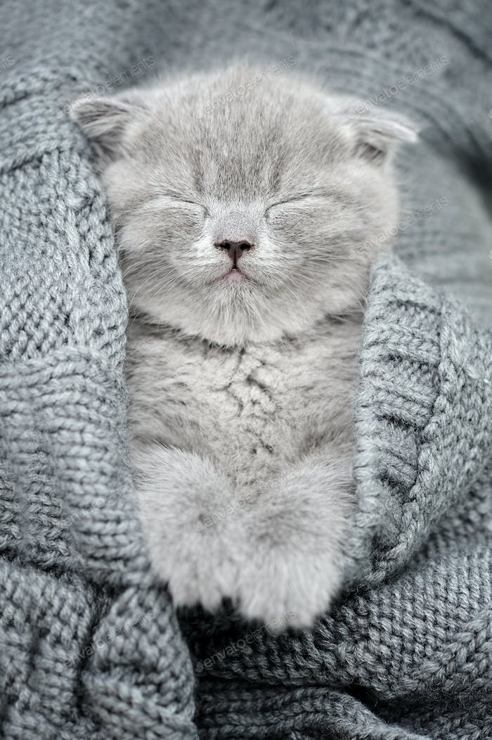 Gray kitten sleep in gray clouth