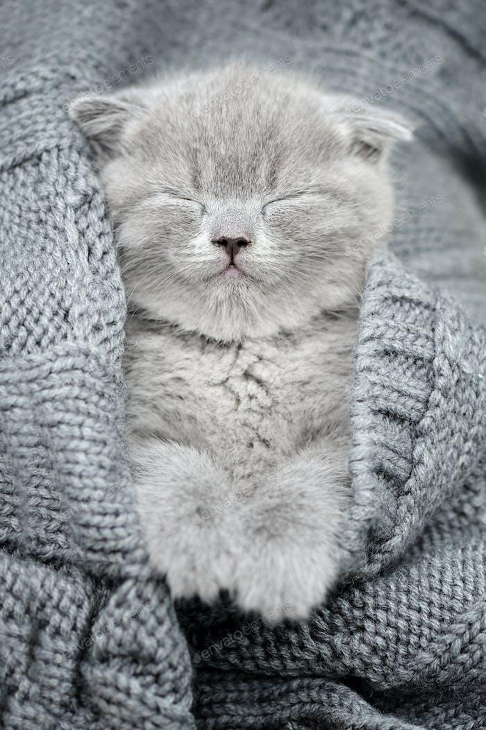 Graues Kätzchen schlafen in grau clouth