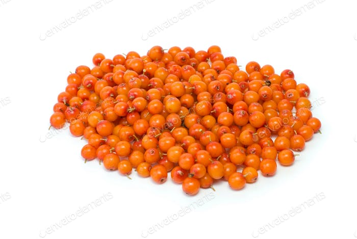 Pile of sea buckthorn berries