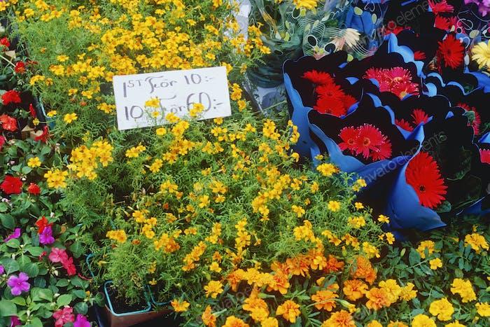 Blumen an einem Marktstand