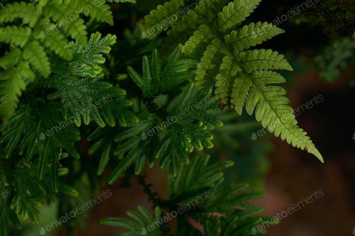 Fresh green fern leaves and moss in garden