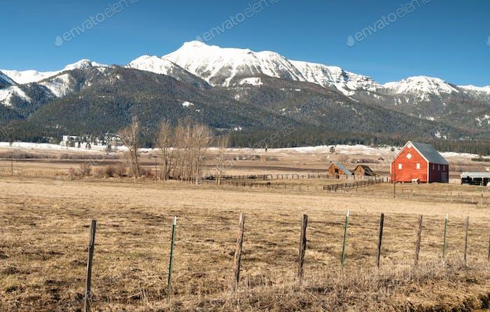 Horse Endures Mountain Winter Wallowa Whitman National Forest