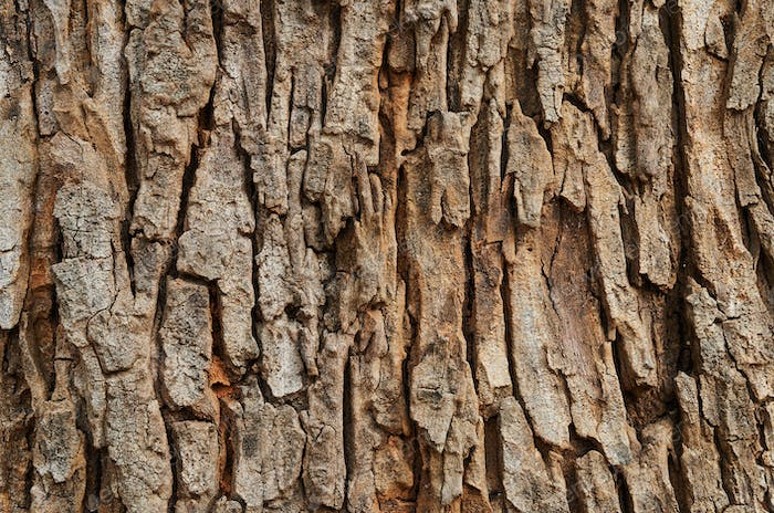 Background of the textured tree trunk