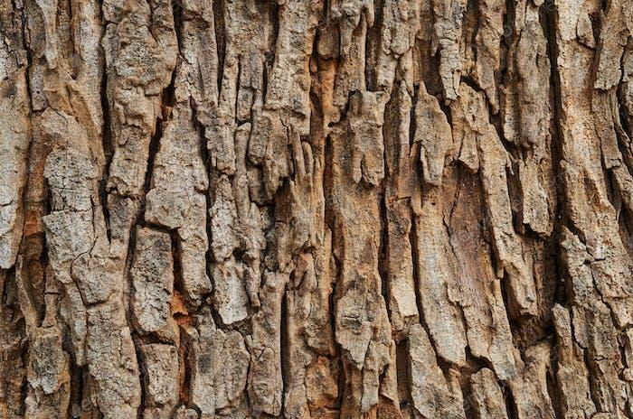 Hintergrund des strukturierten Baumstammes