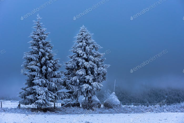 Christmas fir tree in the outdoors covered by snow