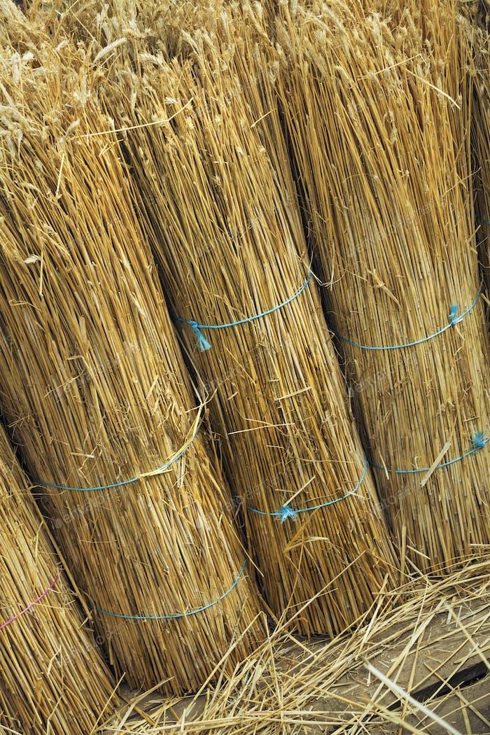 Nahaufnahme von Gelben von Stroh, die zum Reetdecken eines Daches verwendet werden.