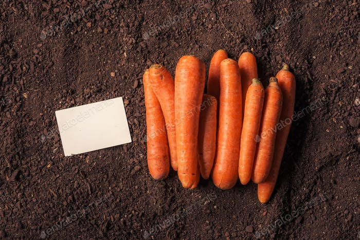 Organic carrot growing business card mock up