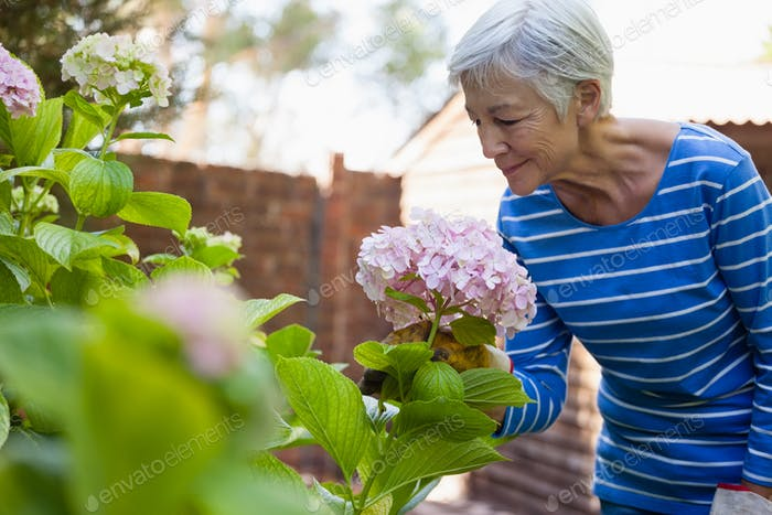 Senior woman smelling pink hydrangea bunch