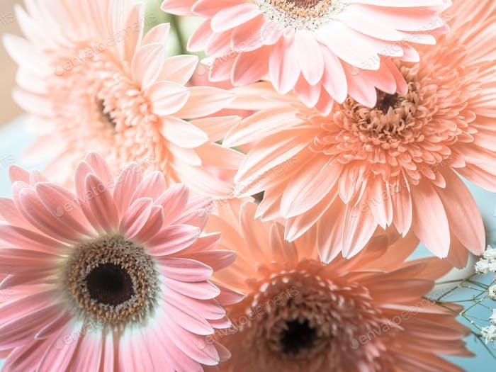 Pink gerbera daisy flowers bouquet
