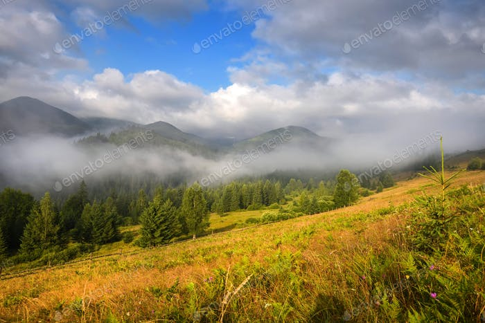 Amazing mountain landscape with fog and colorful herbs