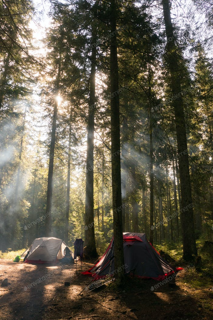 Camping at Trees in Forest With Back Light, Ukraine, Carpathians
