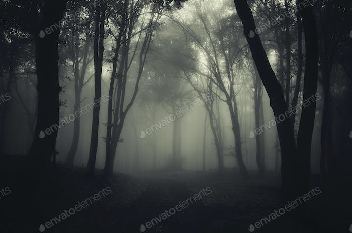 Path through misty haunted woods