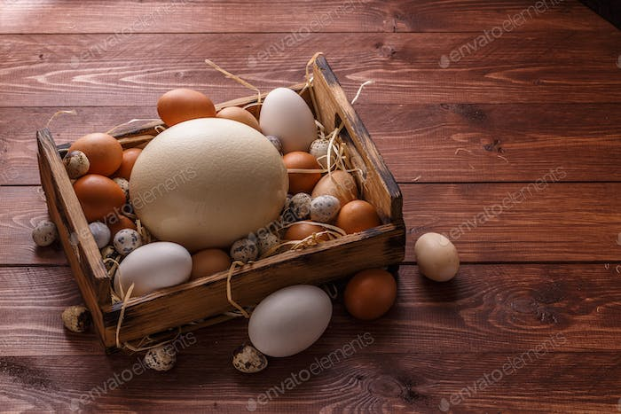 Huge ostrich egg surrounded with small eggs, place for wording