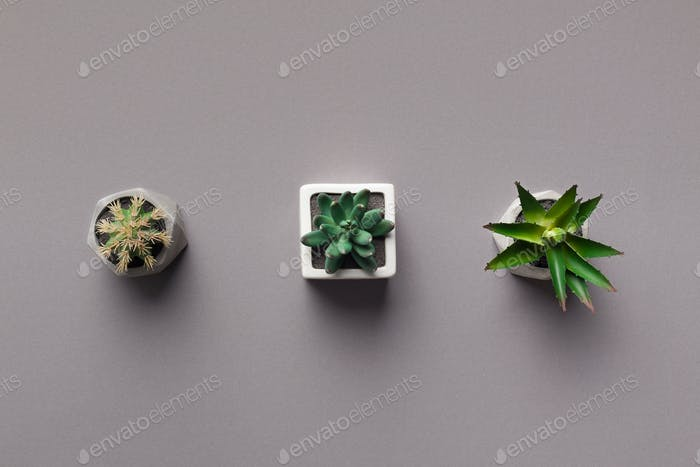 Row of potted succulent plants on grey background