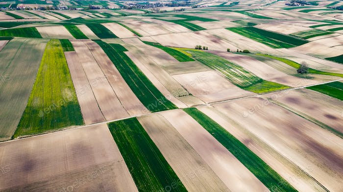Cultivated Fields in Farmland at Countryside at Spring. Aerial Drone View