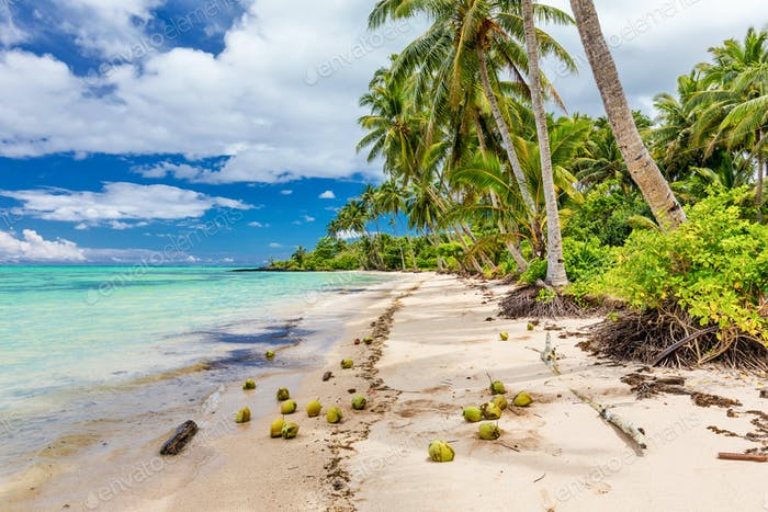 Wild beach with palm trees and coconuts on south side of Upolu,
