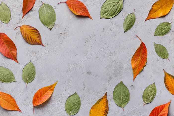 Frame of colored fallen leaves on grey background
