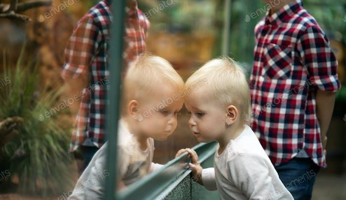 Kids watching reptiles in terrarium through glass
