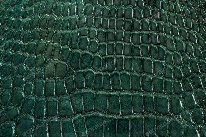 Green alligator leather, skin