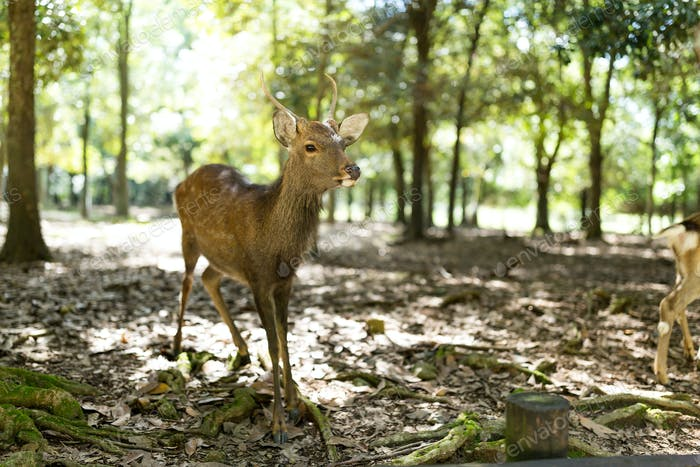 Deer in the park with sunshine