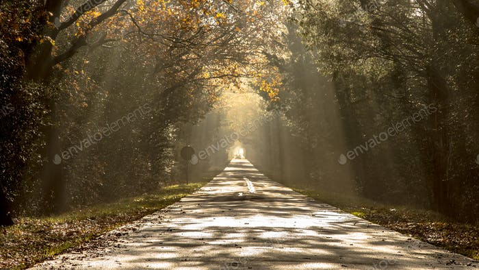 Sun harps on misty morning road