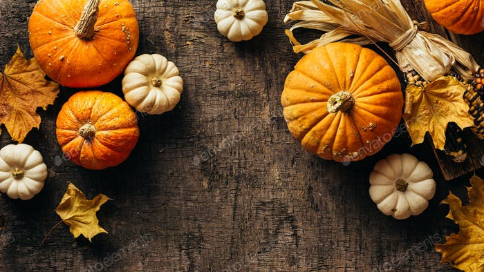 Pumpkins and corn and autumn leaves